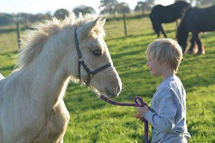 Equine Assisted Learning – Helping Hooves