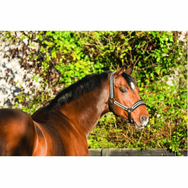 Rambo Diamante Headcollar horse
