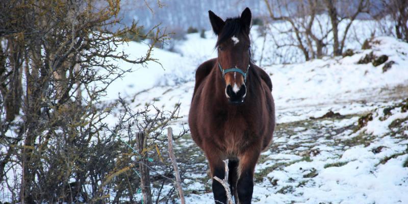 Horse Winter Care