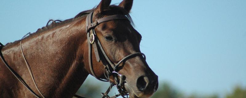 Choosing The Perfect Bridle – A Guide
