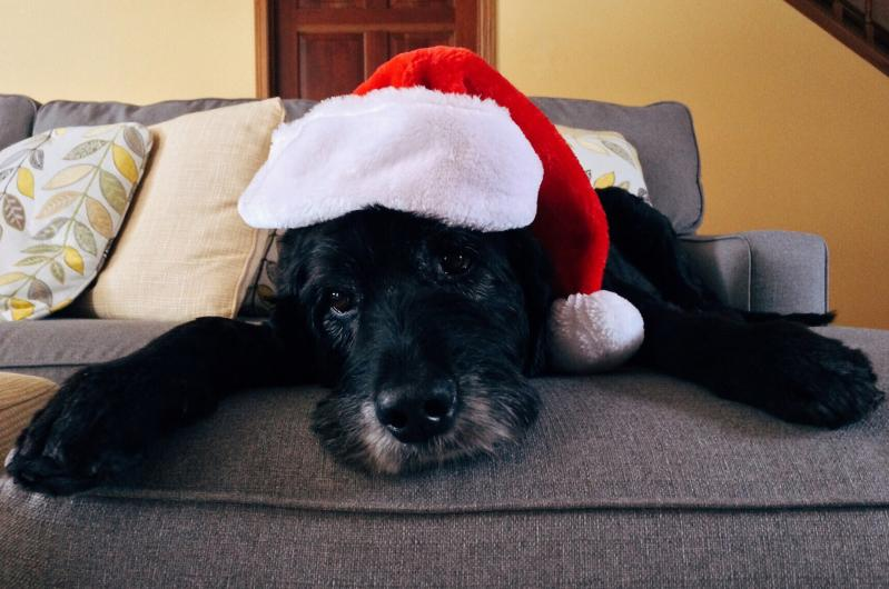 Christmas Rescue Guide - Gifts For Dogs