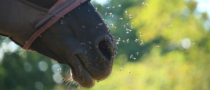Protecting Your Horse From Flies | Beat The Bugs