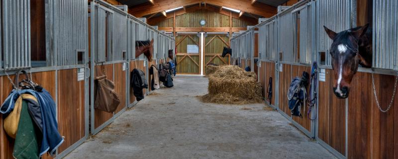 Horse Bedding - Which Type Is Best For You?