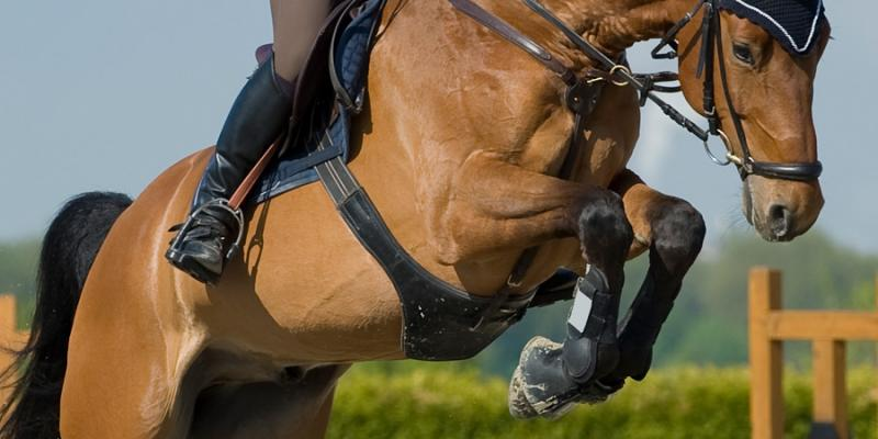 The best horse joint supplements : Ingredients Guide