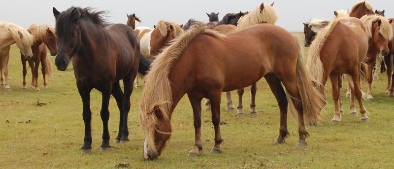Buying Horses - Asking The Right Questions