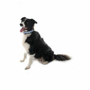 Equisafety Polite Dog Collar
