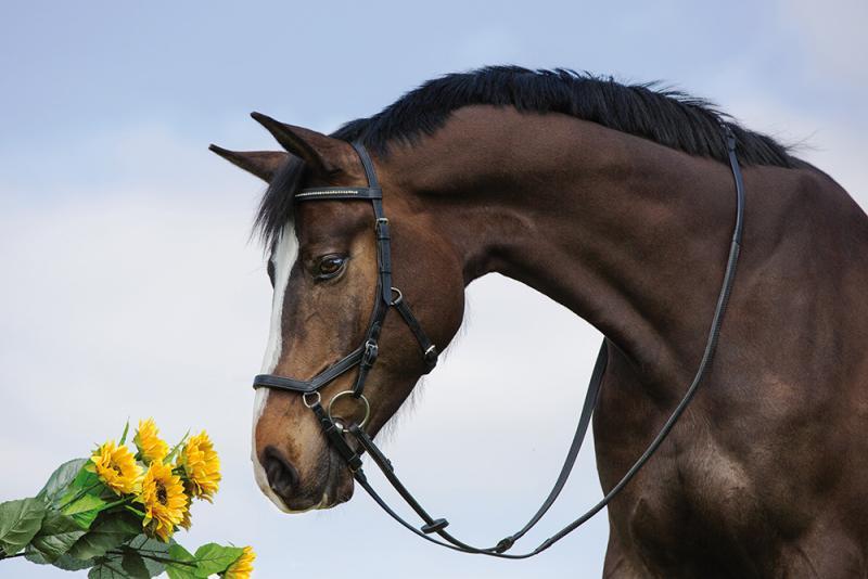 Horseware's Rambo Micklem Multibridle