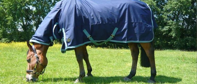 How To Clean & Care For Your Horse Rugs