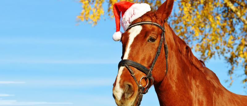 Gifts For Horses – Christmas Rescue Guide