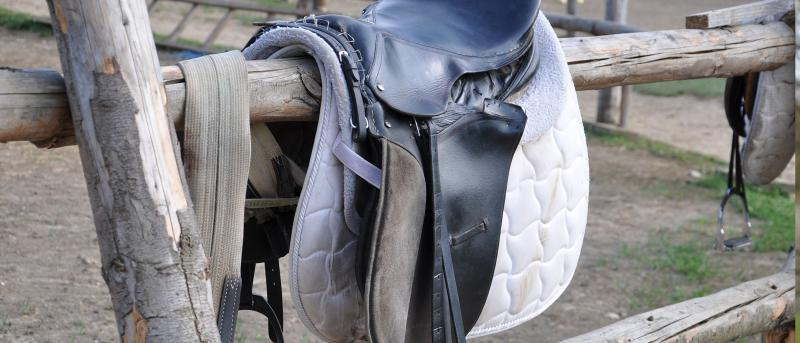 Saddle Cloths and Numnahs - The Guide