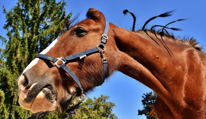 The Equine Superstore BIG Horse Quiz