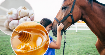 Home Remedies That Will Keep Your Horse Healthy This Winter!