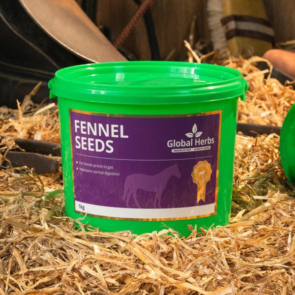 Global Herbs Fennel Seeds - 1 Kg