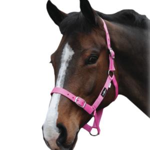 Saxon Brights Headcollar Hot Pink