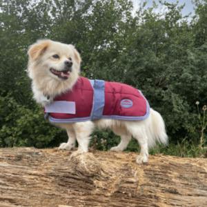 Weatherbeeta Jasper Dog Rug Claret/Storm